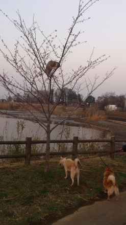 木に登る猫と犬