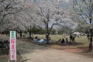 しもつま砂沼桜まつり