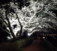 桜の木の枝までもが美しい