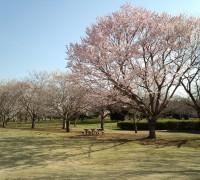 砂沼広域公園内の観桜苑