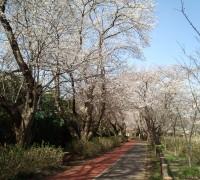 古木と遊歩道