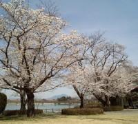 公園・桜・砂沼・砂沼大橋・筑波山