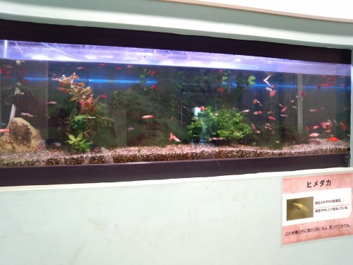 ネイチャーセンターの魚