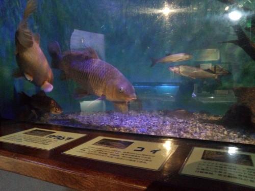 ネイチャーセンターのミニ水族館