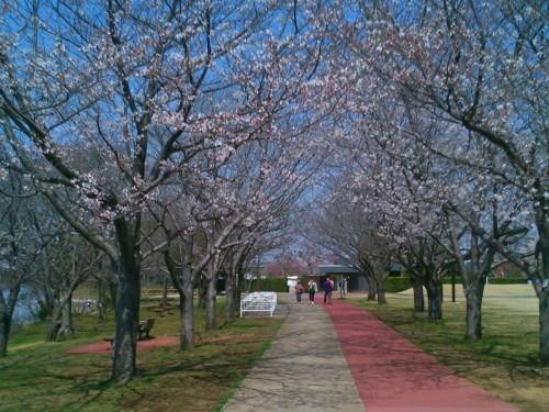観桜苑で散歩