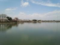 砂沼で釣り