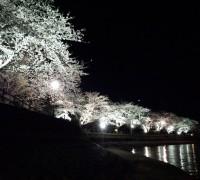 砂沼のきれいな夜桜