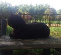 観桜苑の黒猫