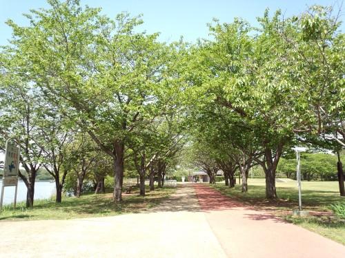 新緑の砂沼