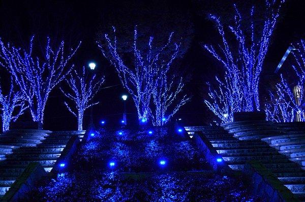 つくば光の森